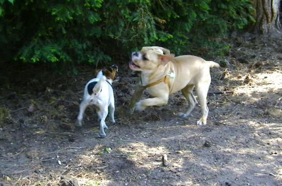Quand Eda rencontre un Bulldog