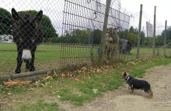 Etoile découvre les ânes