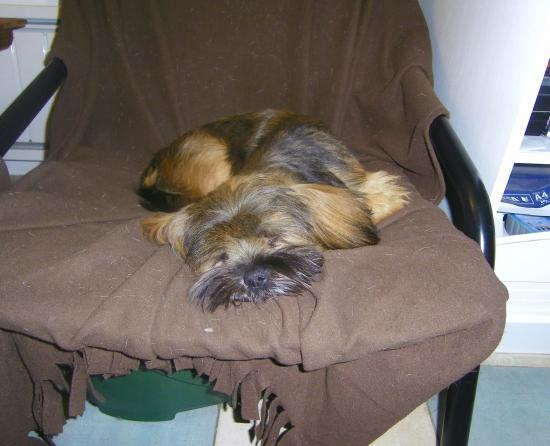 Issia fait la sieste