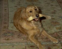 Lui apprendre à lâcher son os
