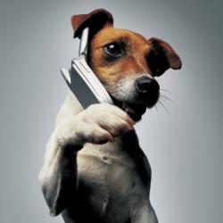 jack-phone.jpg